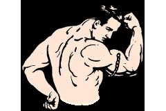 Wzrost tkanki mięśniowej.